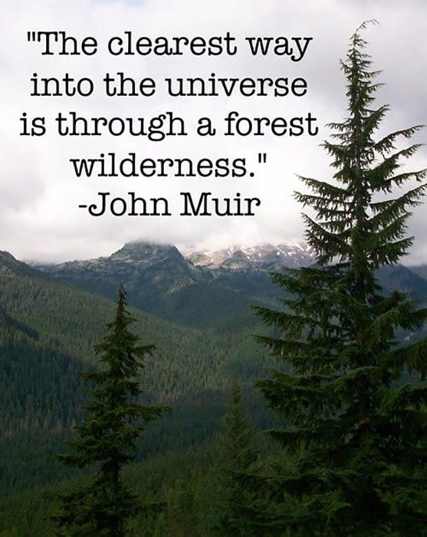 """The clearest way into the universe is through a forest wilderness."" —​ John Muir"