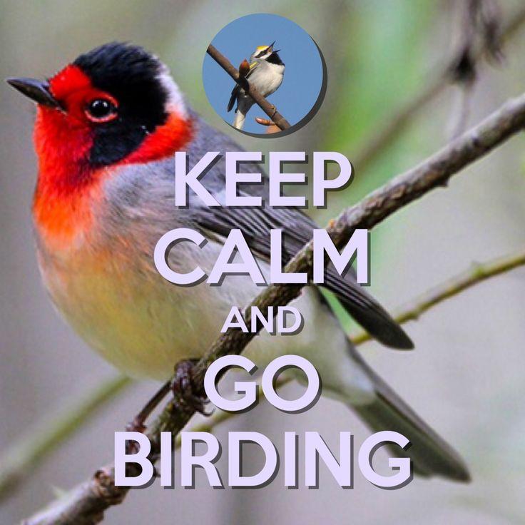 Keep Calm and Go Birding | created with Keep Calm and Carry On for iOS