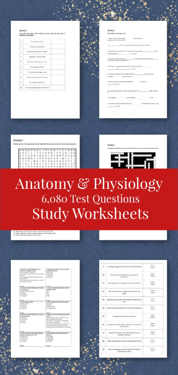 These anatomy and physiology worksheets include a variety of