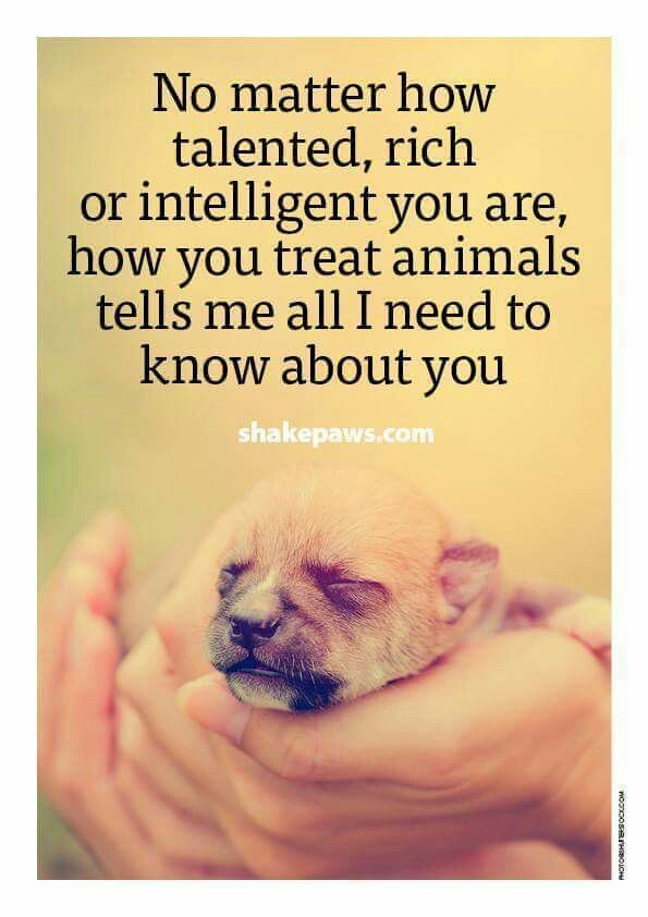 This is so true…how a person treats an animal speaks volumes.