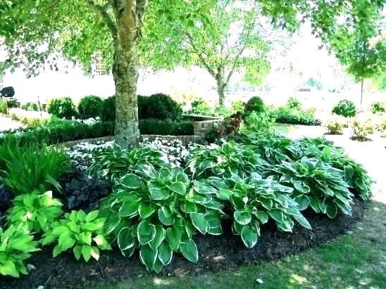 Perennial Shade Plants Zone 7 Google Search Shade Landscaping Shade Garden Design Shade Garden