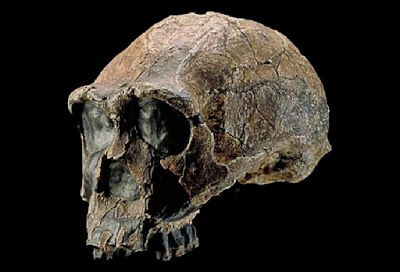 Processing food before eating likely played key role in human evolution