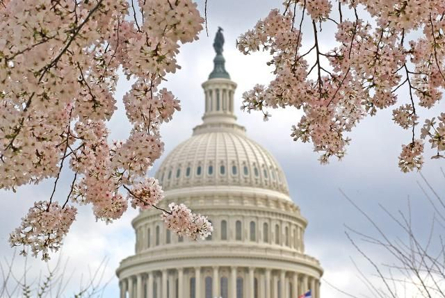 10 Things to Know About the Cherry Blossom Season in Washington DC: When do the cherry blossoms bloom?