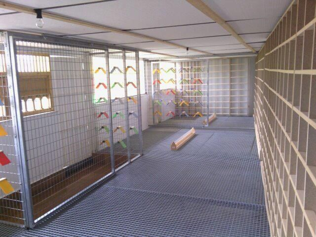 How cool would it be to be able to build this for my pigeons!
