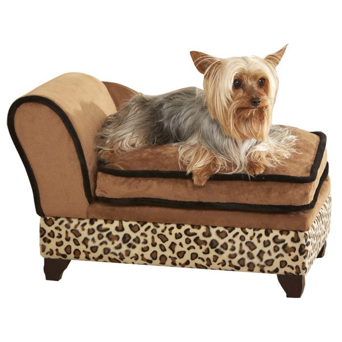 1000 Images About My Teacup Yorkie My Very Near Future