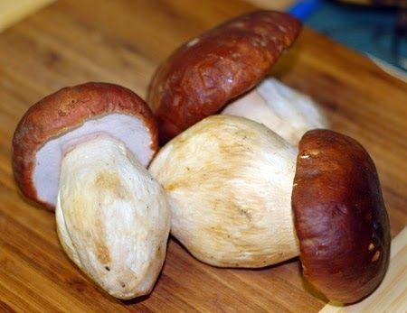 Grow Porcini Mushrooms At Home: Grow Porcini Mushrooms At Home