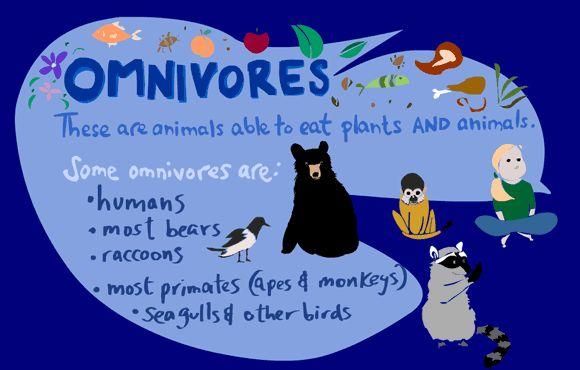 45 best herbivores carnivores omnivores images on pinterest life science physical science. Black Bedroom Furniture Sets. Home Design Ideas
