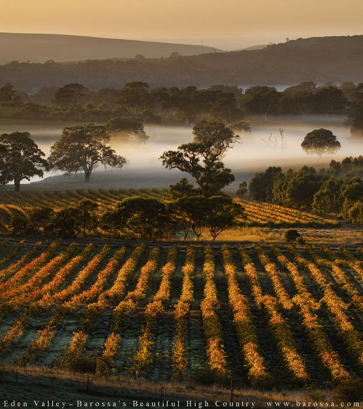 Eden Valley: one of the best places to grow grapes in South Australia. Cool…