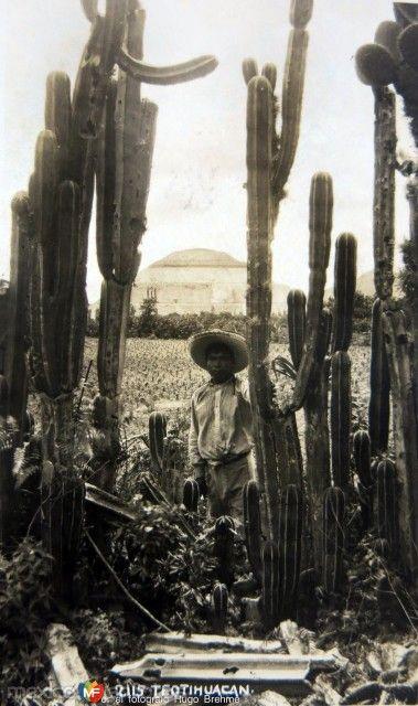 Fotos de Teotihuacán, México, México: PANORAMA Por el fotografo Hugo Brehme Hacia 1930