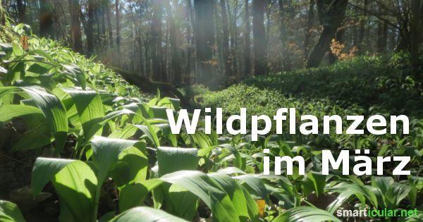 Schmackhaftes aus Feld und Flur: Wildpflanzen im März