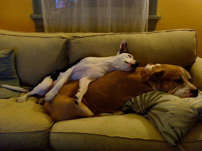 162 best images about Dogs and Furniture on Pinterest