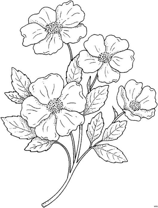 Blumengemischt_HFB-0033 (530x700, 61Kb)
