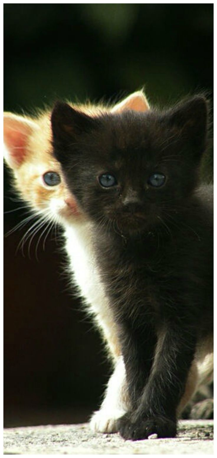 Pin By Tam S Boards On The Pet Store Animals Happy Cat Pets