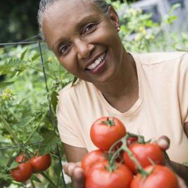6d6617ec0d21e4641804e9a4dc149e43  growing vegetables vegetables garden - Is Borax Safe For Vegetable Gardens