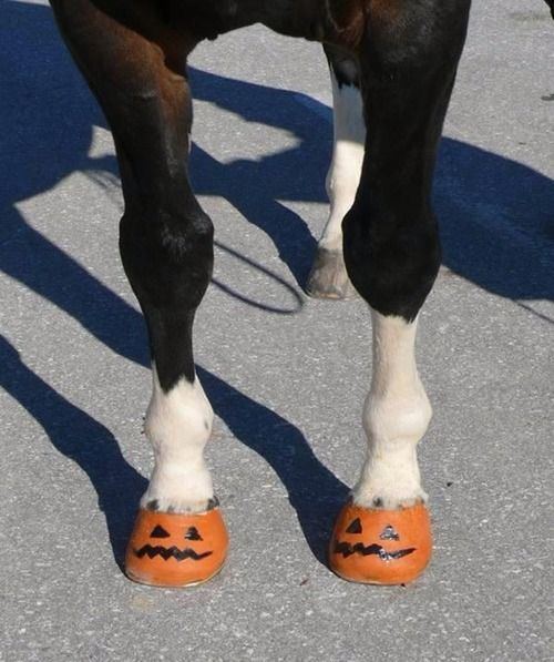 Pumpkin painted horse hooves! Ha! Metro Mounted should do this for Halloween!