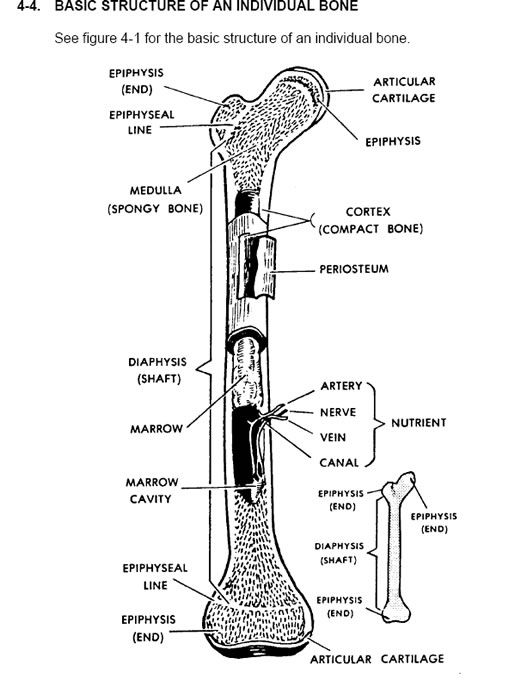 The #1 Human Anatomy and Physiology Course | Learn About The Human Body With Illustrations and Pictures