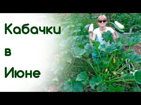 Все об уходе за кабачками - YouTube
