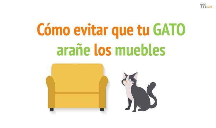 Consejos para evitar que tu gato arañe los muebles | Mascoweb #consejos #gatos #gato #mascotas #mascoweb #arañazos #arañe #muebles #hogar #educación