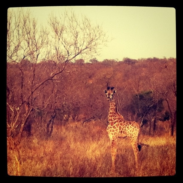 Spotted! Baby Giraffe. Let out a little squeal when I saw her. Her umbilical chord is still attached