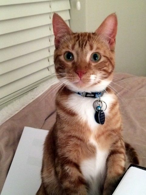 Pic taken on 10.09.2014  He has grown into a handsome kitty. <3 Love him