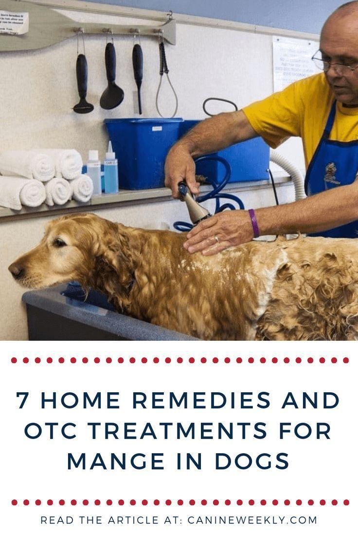 7 effective home remedies for mange in dogs dog mange