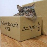 #dogalize El Gato de Schrödinger: la historia del Gato de Schrödinger #dogs #cats #pets