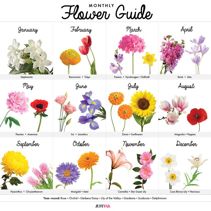 Flowers Of Each Month: A Visual Guide To Wedding Flowers By Month