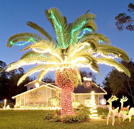 decorated palm trees for christmas my husbands idea of a decorated tree christmas pinterest christmas coastal christmas and beach christmas