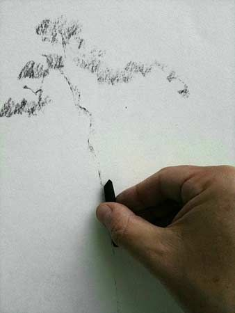 drawing trees with charcoal
