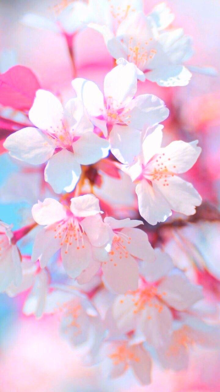 Floralwallpaper Iphonewallpaper Flower Pretty 油絵の花