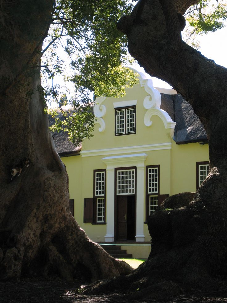 Vergelegen wine estate & Biodiversity Champion - with its famous camphor trees
