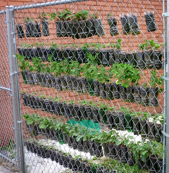 You have to do what works for you and just because you only have a small patch of land (or none at all) that doesn't mean you have to hold back on gardening. This is a vertical soda bottle garden.
