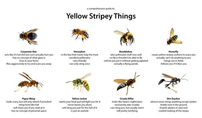 What S The Difference Between Wasps And Bees Http Www Earthrangers Com Wildwire Western Bumble Bee Bee Bees And Wasps Wasp