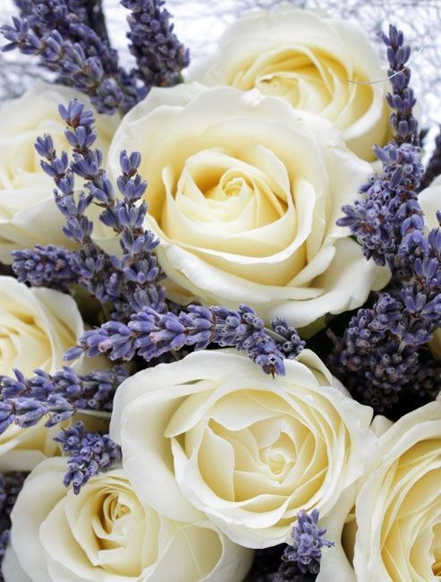 ♔ Ivory roses and lavender. What a beautiful combination....