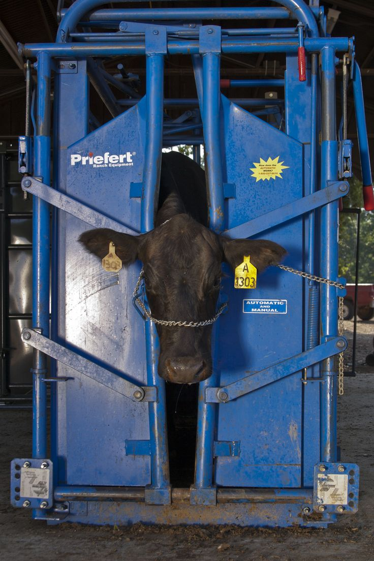17 Best Images About Cattle Equipment On Pinterest