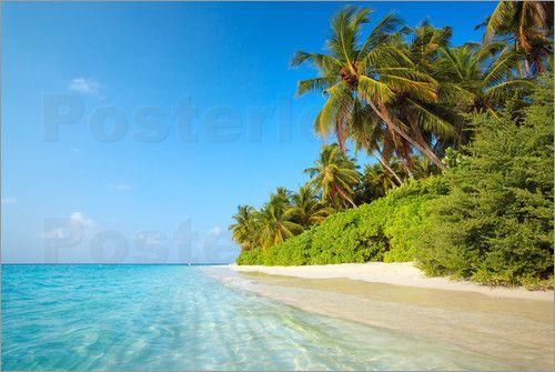 Poster Tropischer Strand mit Palmen auf den Malediven