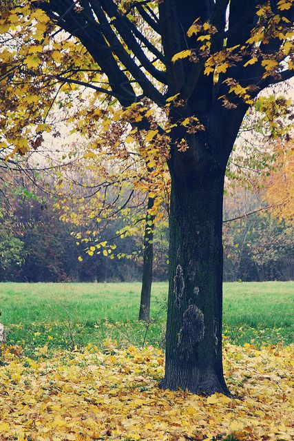Hazy autumn afternoon