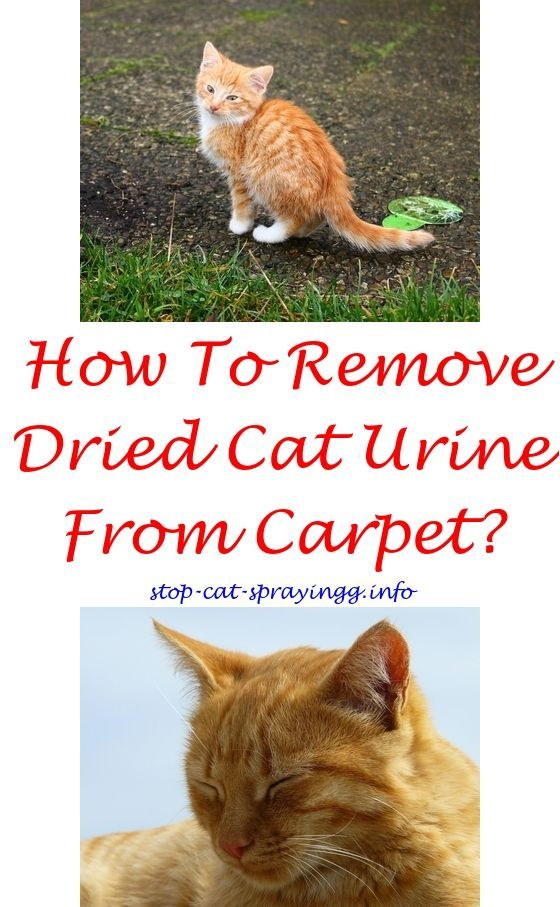 Cat Dete Spray Bottle To Show Keep Cats Off