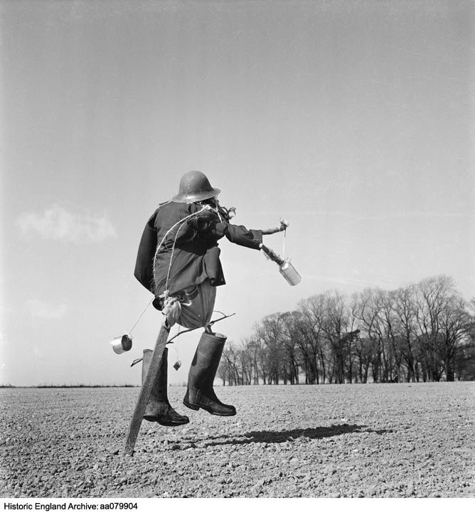 AA079904 A scarecrow dressed in a tin helmet, Kent.   Image featured in Country Fair magazine, March 1955. The caption reads: 'Some Of This Modern Art.....In surrealist circles, this art form is called a mobile. We believe that this is its first practical application to a farming problem. It evidently works'.  DateApr 1954 Photographer: John Gay