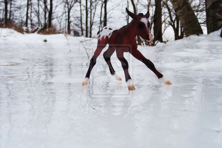 Cutest breyer horse image