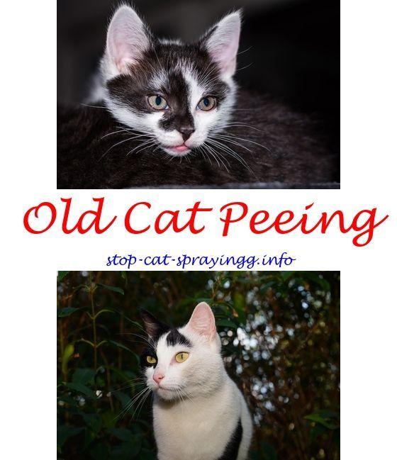 stopcatspray sunbeam cat spray deterrent - cat anxiety spray