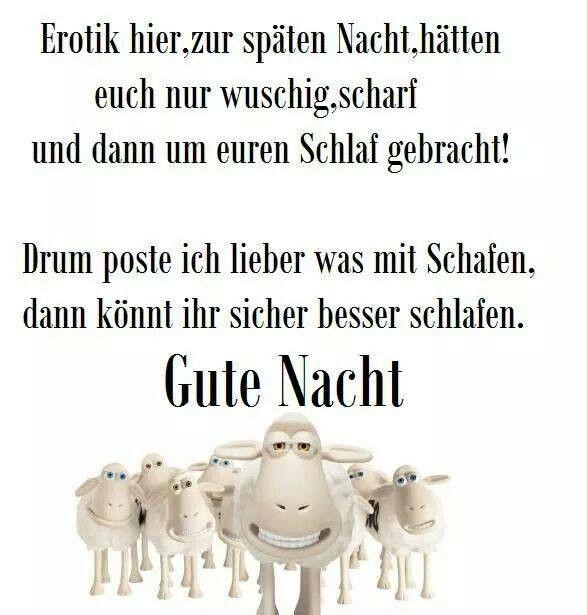 Gute Schafnacht!