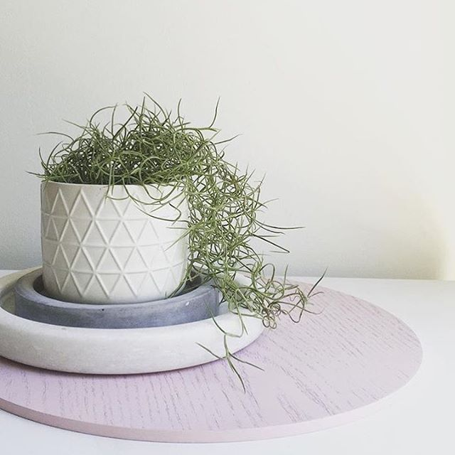 FRIYAY! @bargainsquad | #kmart trays and canister used as pot #kmartstyling