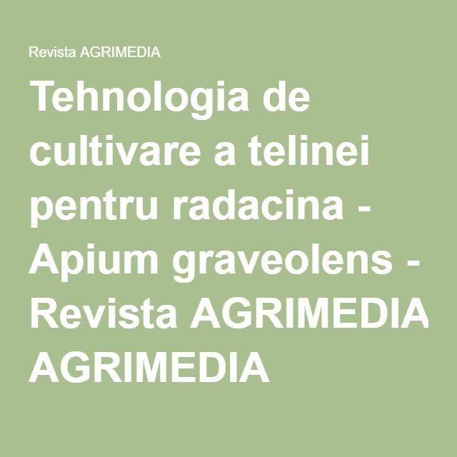Tehnologia de cultivare a telinei pentru radacina - Apium graveolens - Revista AGRIMEDIA