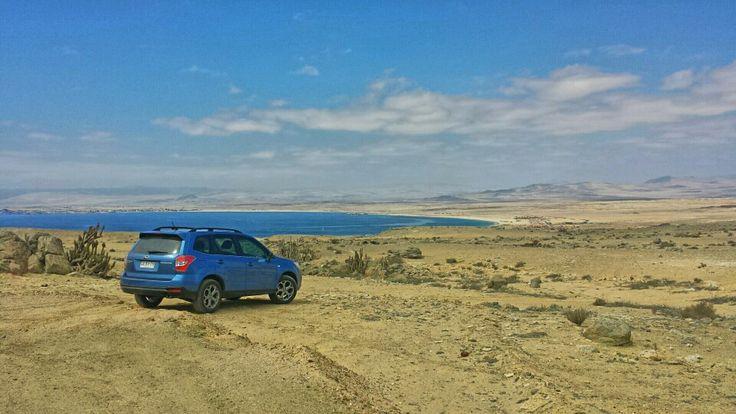 Forester en Región de Atacama