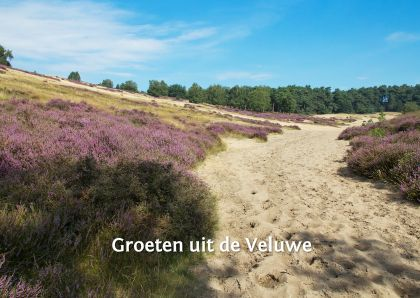 Zandlandschap in de Veluwe