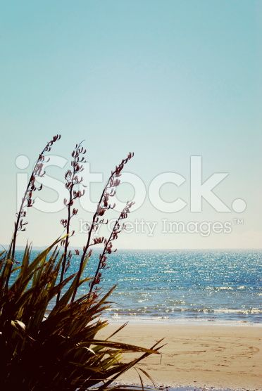 New Zealand Seascape, Retro Feel royalty-free stock photo