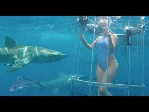 Tiburón muerde a actriz porno en vivo (video)