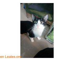 PEQUEÑA GATITA EN ADOPCION  #Adopción #adopta #adoptanocompres #adoptar #LealesOrg  Contacto y info: Pulsar la foto o: https://leales.org/animales-en-adopcion/gatos-en-adopcion/pequena-gatita-en-adopcion_i2363 ℹ   Pinky.  Soy una gatita muy bonita y cariñosa a pesar de ser adulta 1.5 años soy chiquitina peso dos kilos solamente ocupo muy poquito espacio y quepo en cualquier casa. Tienes un rincón para mi? Me gustaría saber lo que significa tener un hogar y una familia humana prometo que no…