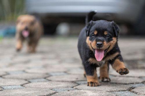 Was ist die Prägezeit und was ist besonders wichtig? | Hunde